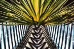 Homage to Calatrava