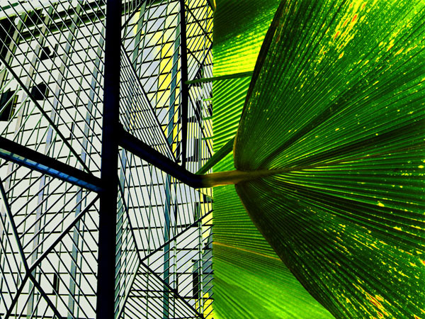 Nice. Greenhouse at Airport. Gravity/The Force of Nature