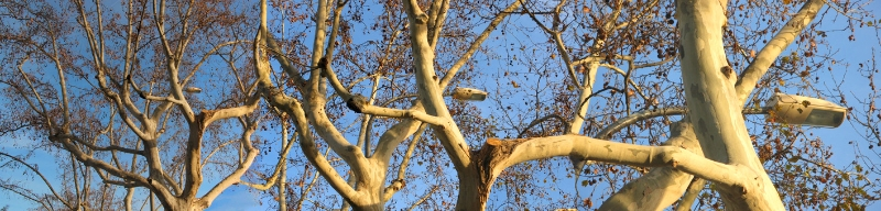linked-branches-in-barcelona