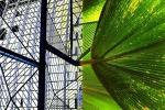 """Nizza-Nice /Botanical garden:""""gravity"""""""